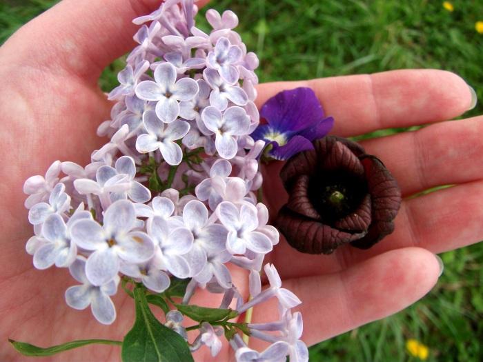 spring-blossoms-1